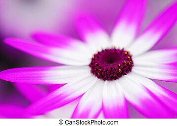 beau, jardin fleur