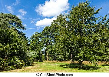 beau, jardin, parc, pays boisé, luxuriant, vert