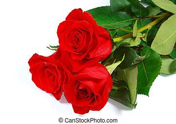 beau, jardin, trois, roses, frais, rouges