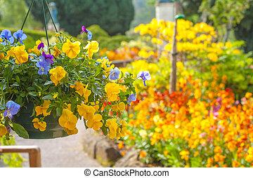 beau, jaune, pensée, panier, fleurs