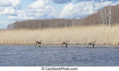 beau, jetée, lac, dock, vieux, tôt, rustique, ou, jour, printemps, bois