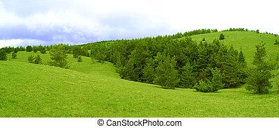 beau, large, pré, panorama, vallonné, forêt, sapin, paysage