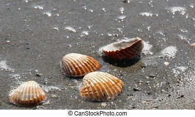beau, laver, seashells, soulagement, vague