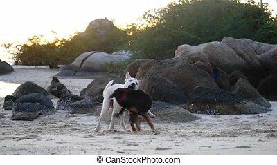 beau, lent, motion., chiens, rivage, mer, jouer, 1920x1080, sunset.