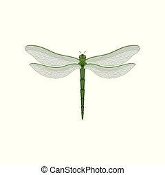 beau, libellule, paires, flar, corps, deux, long, wings., grand, insecte, vecteur, vert, fast-flying, transparent, icône