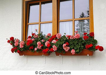 beau, maison, rural, géranium, fenêtre