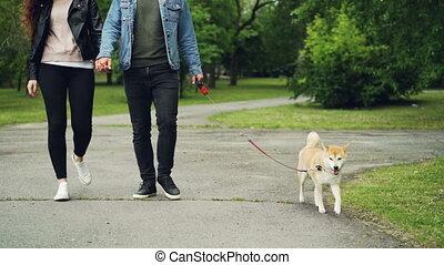 beau, marche, lent, coup, chouchou, animaux, concept., parc, jeune, mouvement, courant, sien, bas, gens, petite amie, propriétaires, long, jambes, path., chien, homme