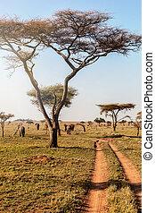 beau, marche, tanzanie, groupe, éléphants, serengeti, afrique, parc national