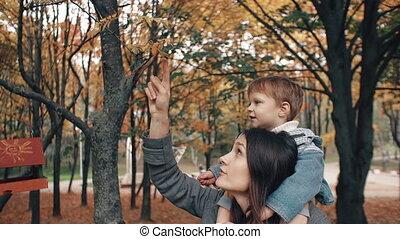 beau, mignon, épaules, garçon, arbre, tient, parc, jeune, fils, automne, plucks, 4k, mère, peu, baies, rouges