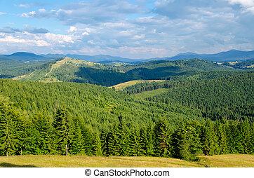 beau, montagne, arbres, vert, carpathians, paysage