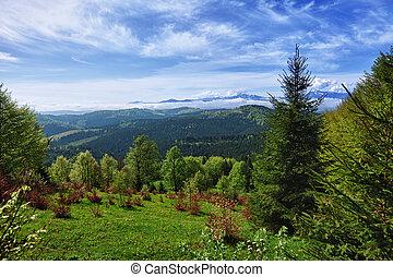beau, montagne, carpathians, -, paysage
