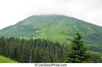 beau, montagne, forêt
