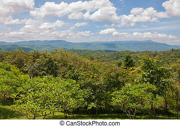 beau, montagne, paysage vert, arbres