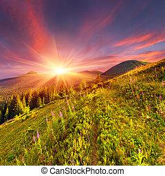 beau, montagnes, automne, fleurs roses, paysage