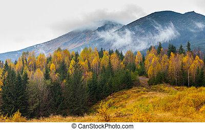 beau, montagnes, forêt automne, karpaty, paysage
