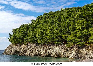 beau, montenegro, arbres, rochers