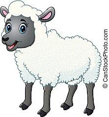 beau, mouton, blanc, isolé, fond