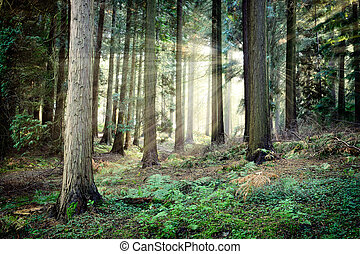 beau, mystérieux, coucher soleil, forêt