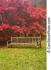 beau, nature, image, automne, automne, paysage