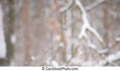 beau, neige, brouillé, forêt, fond, tomber