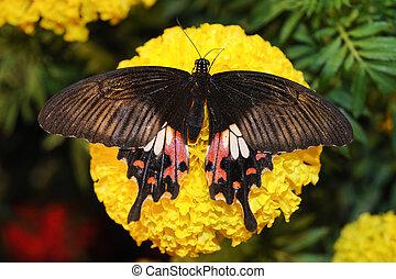 Papillon moth cycle vie papillon vie moth isol images rechercher photographies et - Duree de vie papillon de nuit ...