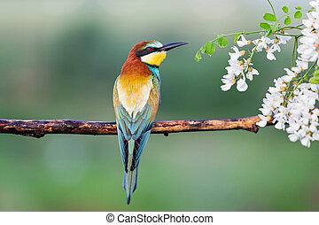 beau, oiseau, séance, exotique, branche