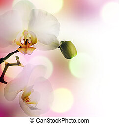 beau, orchidée