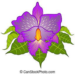 beau, orchid., vecteur