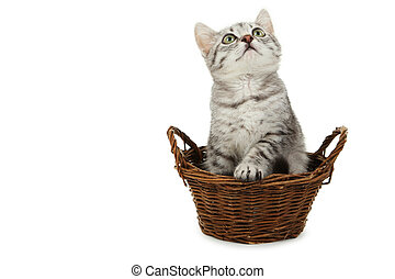 beau, panier, blanc, isolé, chat