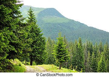 beau, panorama, forêt, montagne