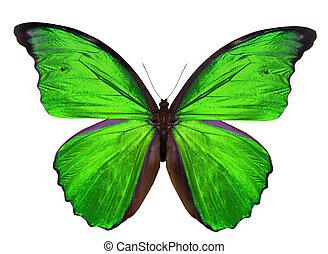 beau, papillon, blanc, isolé