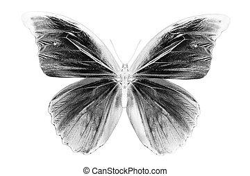 beau, papillon, image, arrière-plan noir, blanc