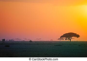 beau, paysage, coucher soleil, savane, africaine