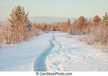 beau, paysage hiver, neige