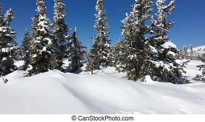 beau, paysage., hiver, neigeux, en mouvement, route