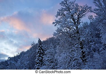 beau, paysage, hiver