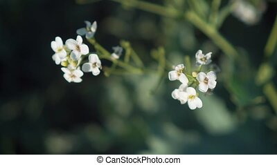 beau, paysage., printemps, feuilles, arbre, park., arbrisseaux, branche, fleurs blanches, vaciller, vent