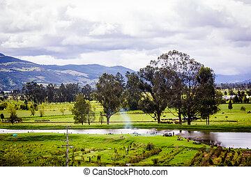 beau, paysage,  tr,  nature, Parc, vert, Printemps, herbe