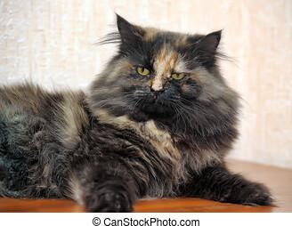 beau, pelucheux, écaille, chat