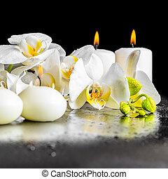 beau, phala, fleur, fleurir, spa, blanc, composition, orchidée