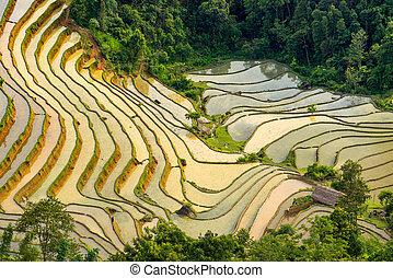beau, phi, hoang, su, champ, vietnam, terrasse, riz