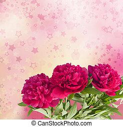 beau, pivoines, bouquet, résumé, effet, bokeh, arrière-plan rose