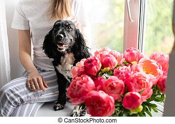 beau, pivoines, fleurs, rebord fenêtre, pivoine, shop., chien, vase., séance, espace, jeune, épagneul, delivery., russe, verre, floral, girl, copie, corail