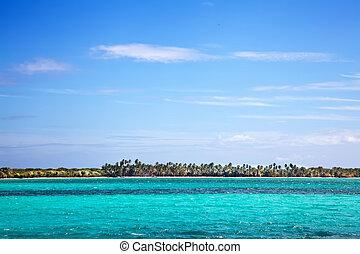 beau, plage, paumes, océan