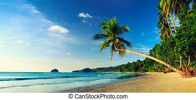 beau, plage tropicale, palmiers