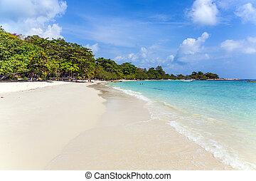 beau, plage tropicale, paumes