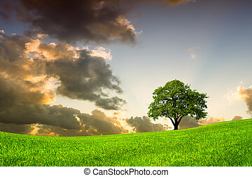beau, planète, vert