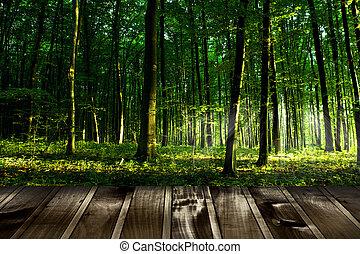 beau, plancher, lumière soleil, automne, forêt bois, planches