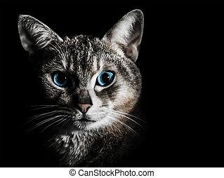 beau, portrait, chat