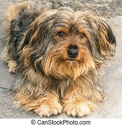 beau, portrait, chien